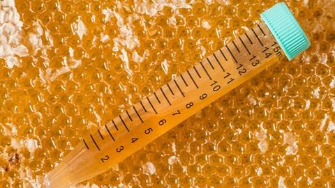 provetta con miele