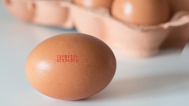 Etichette uova