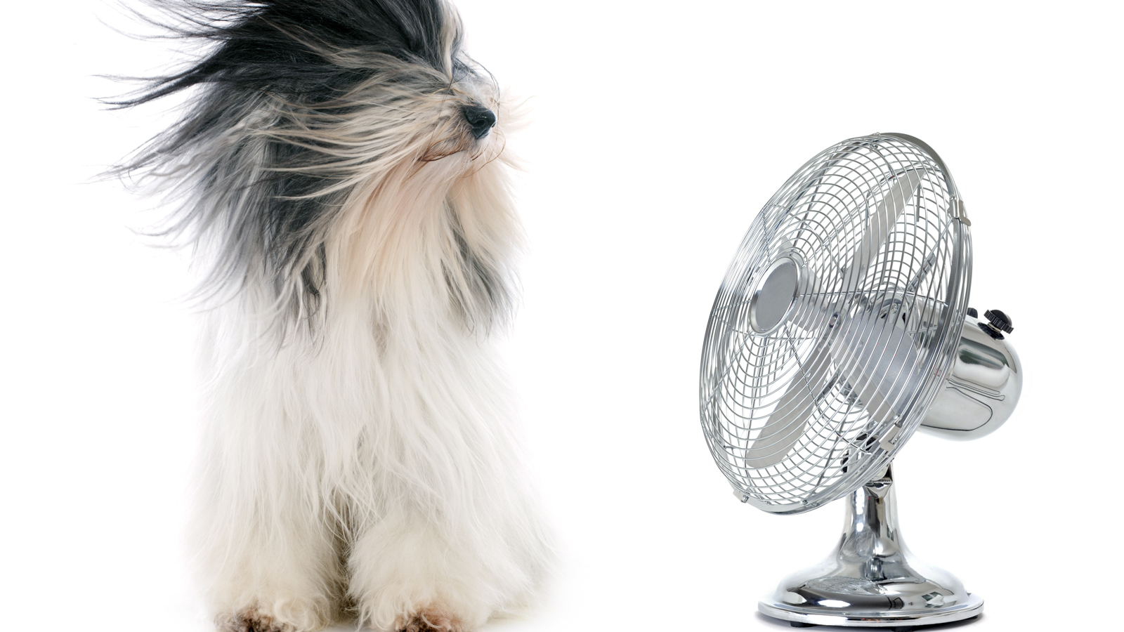 Rinfrescare Casa Fai Da Te come scegliere il ventilatore giusto | altroconsumo