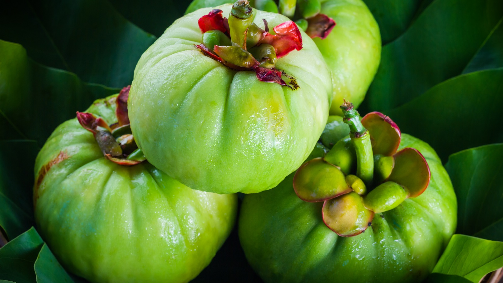 Miracle weight loss fruit garcinia cambogia