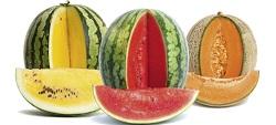 anguria melone