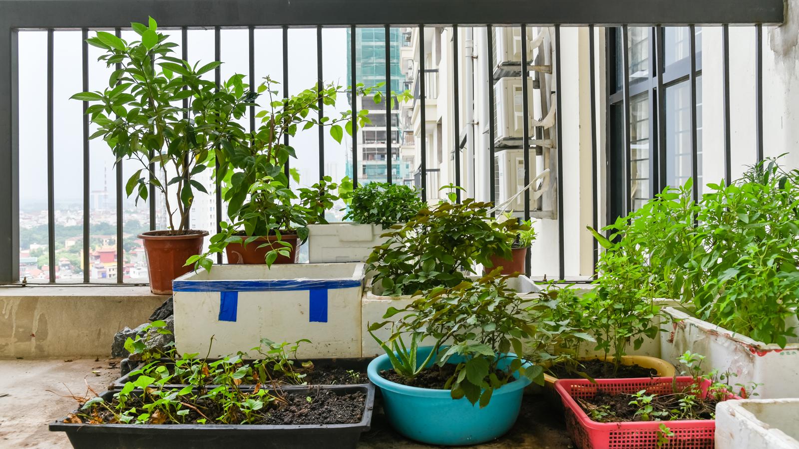 Verdure e piante aromatiche a km 0 sul balcone - Coltivare piante aromatiche in casa ...