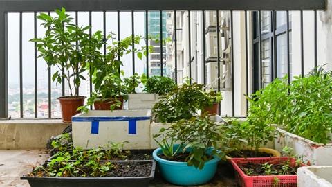 orto balcone